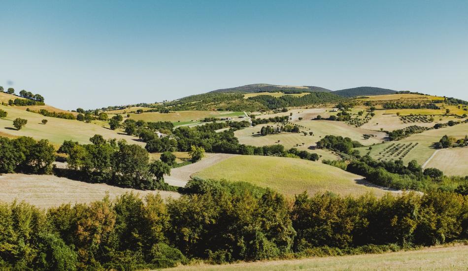 colline-marchigiane